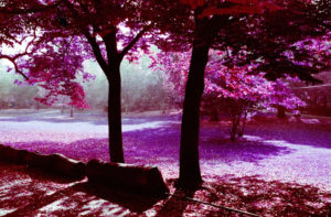 News: LomoChrome Purple 400 - Beispielfoto - 02