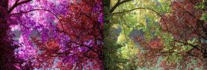 Der Purple im Vergleich zu einem normalen Farbnegativfilm